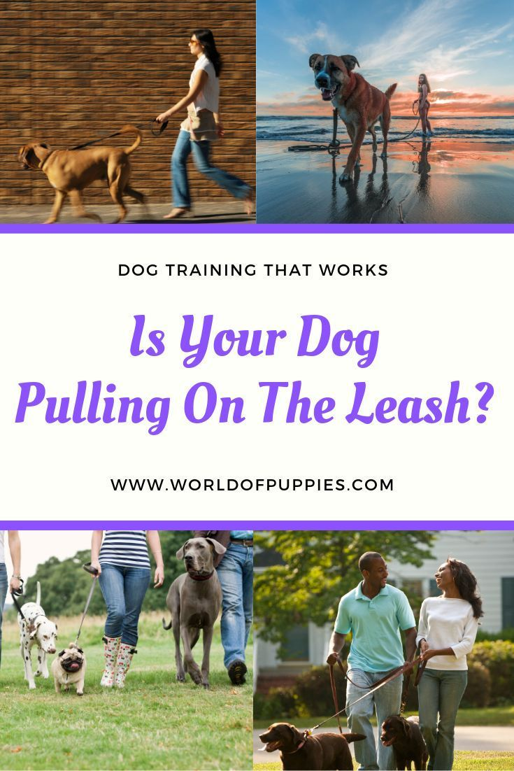 Problems With Your Dog Pulling On The Leash During Walks Learn