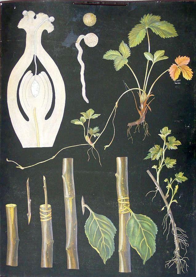 Kasvien lisääntyminen - Ebba Masalin F.Tilgmannin Kivipaino 1908