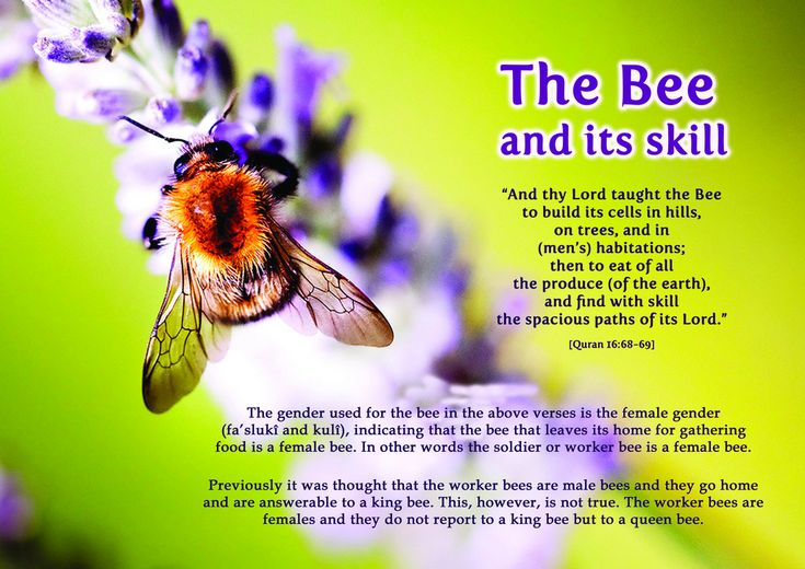 DesertRose///Picture Perfect : Quran & Modern Science – The Bee &itsskill