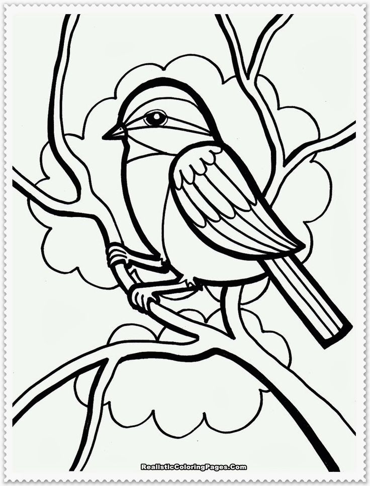 coloring pages robin tree - photo#14