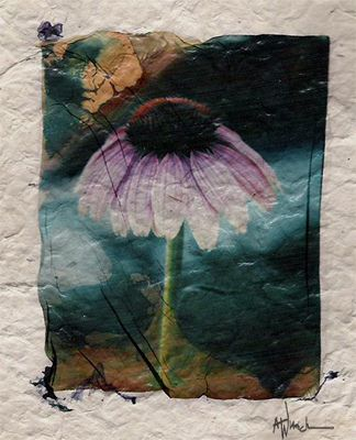 Polaroid Emulsion Lift with 669 Film.