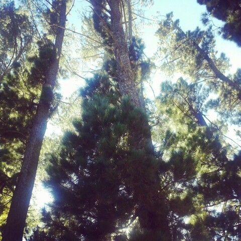 Tree tops (Franschhoek)