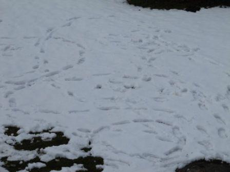 Spuren/Bilder im Schnee