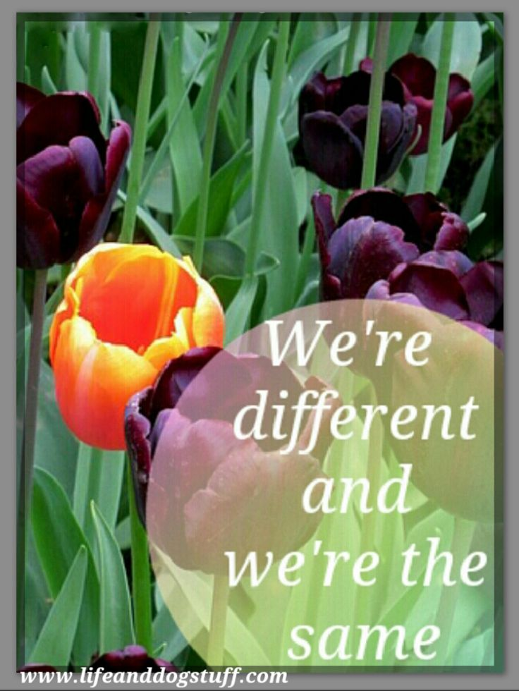 We're Different And We're The Same. #blogger #blog
