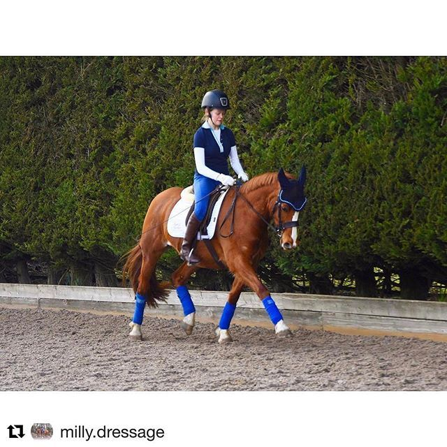 Beautiful shot of Harry Hall Junior Rider Milly Dove in her sculpting #Breeches #equestriansofinstagram  #Repost @milly.dressage with @repostapp ・・・ Rest day today 😇 and I had revision... then a KFC - oops Plan this week is to practice half 20m loop back to the track counter canter and trotting poles! Then Thursday will be a light session before Friday regionals 💕 this was the first time I wore my new harry hall boots and I love them!!! Also think my jodhpurs are the coolest things…