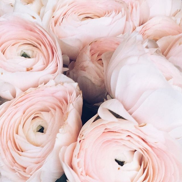 Have a good Monday!  #luisabeccaria #flowerpower  #monday#inspiration#fiori#flowerseverywhere#beauty#femininity#feminime#makehappy#newweek#newbeginning#pink#powder#tenderness#dreamy