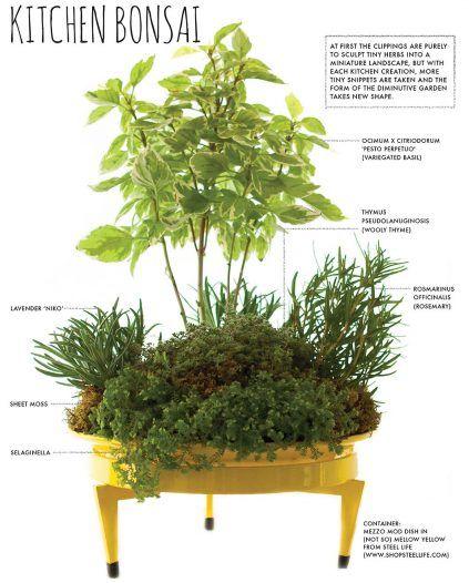 Make A Countertop Kitchen Bonsai Herb Garden Container 400 x 300