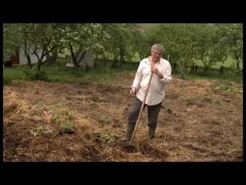 Mélymulcsos kertművelés, egy igazi permakultúrás praktika! Élőben megtekinthető Gömörszőlősön, az Ökológiai Intézet A Fenntartható Fejlődésért Alapítvány bio...