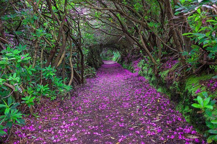 Bonito lugar para dar un paseo :) www.xtremonline.com