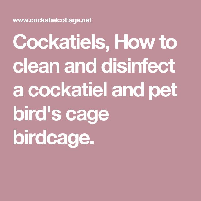 Cockatiels, How to clean and disinfect a cockatiel and pet bird's cage birdcage.