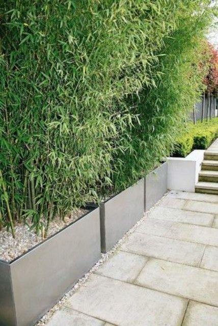 Die besten 25+ Bambus Pflanzer Ideen auf Pinterest Bambus - moderne garten mit bambus