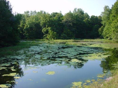Vue sur le Lac d'Orient à marée haute - Parc naturel régional de la Forêt d'Orient