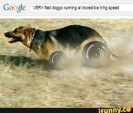 1328a923d63589a5e3252f516fa8740a love and light animal memes 703 best meme images on pinterest dankest memes, random stuff,Nyoom Meme