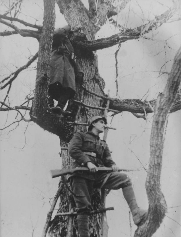 Два румынских солдата ведут наблюдение с дерева на Кубани