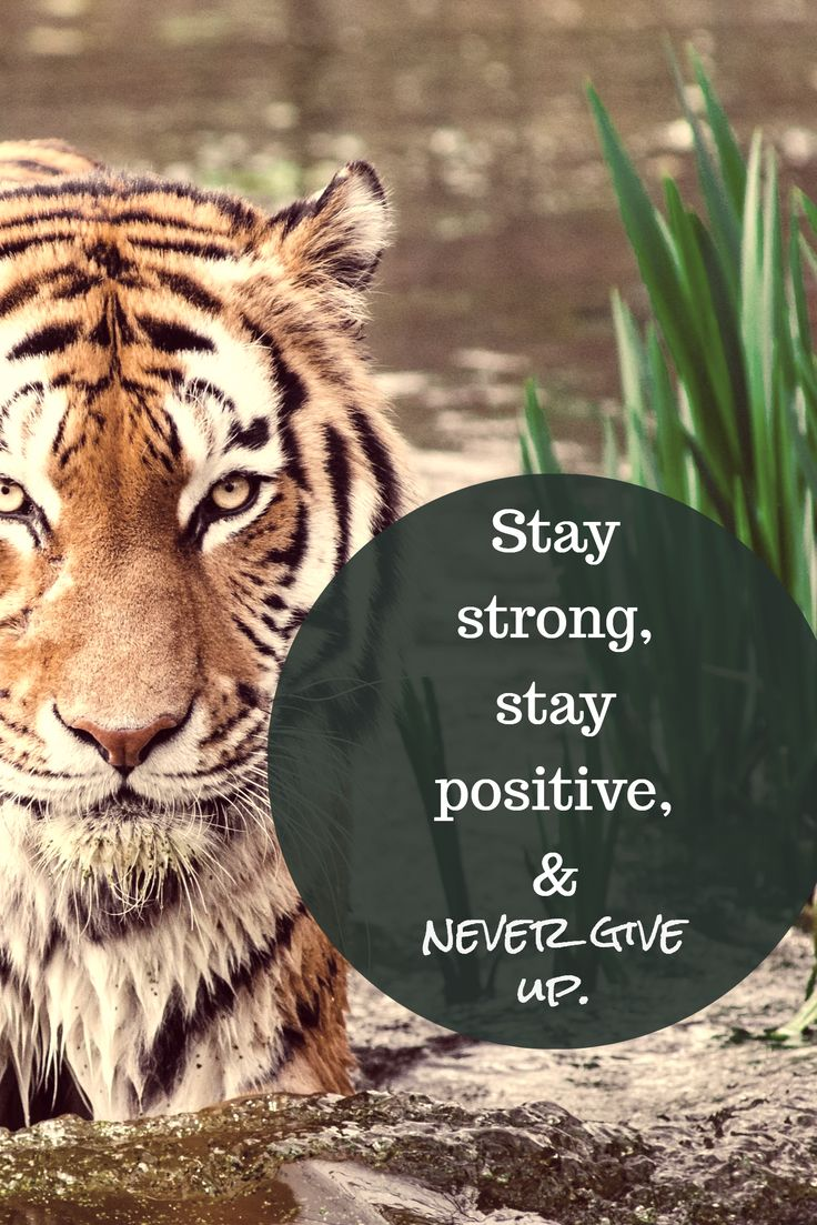 Stay strong, stay positive, & / never give up.