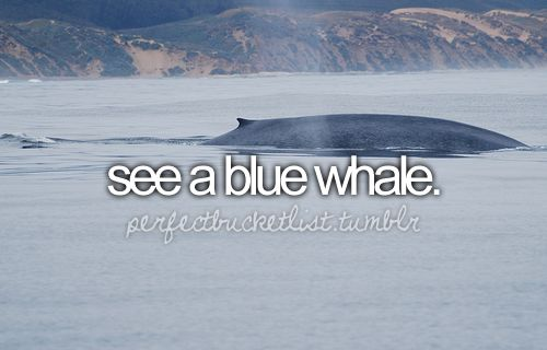 bucket list...was supposed to go whale watching on cape breton island but the ocean was too rough :(