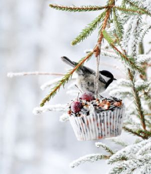 Suet/Seed/Berry Cupcake - ♕ a winter treat for the birds!
