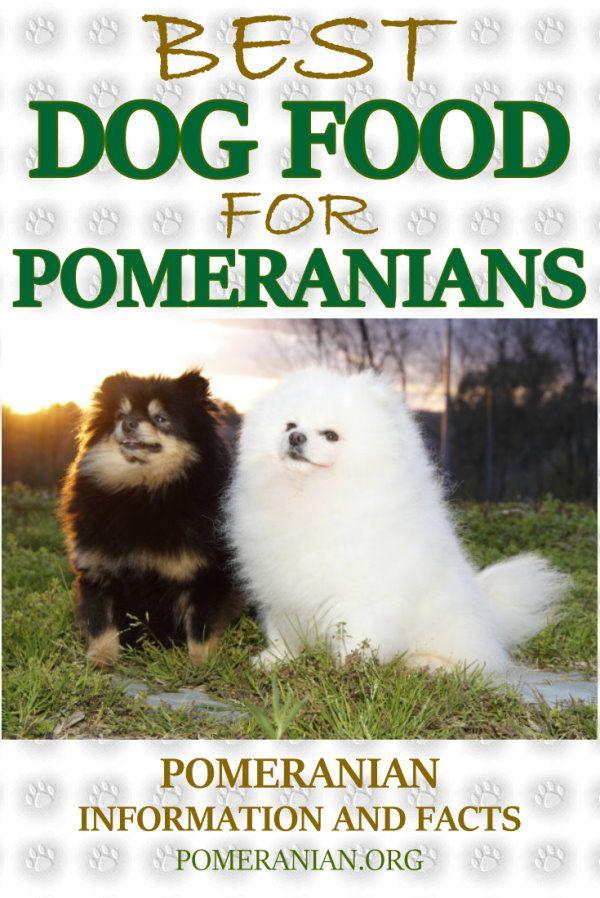 Best Dog Food For Pomeranians Best Dog Food Dog Food Recipes