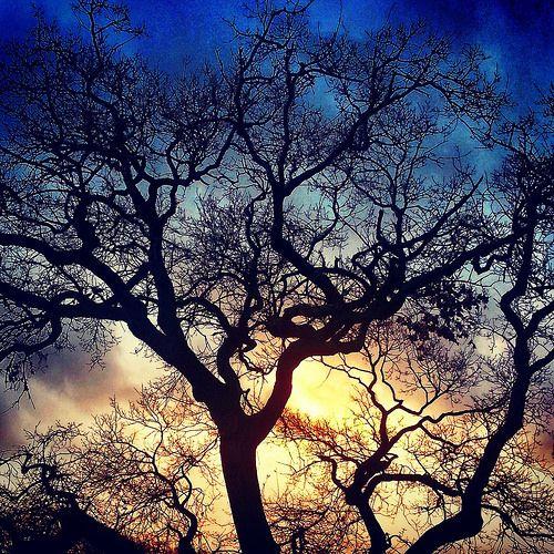 tree | por clarism_4