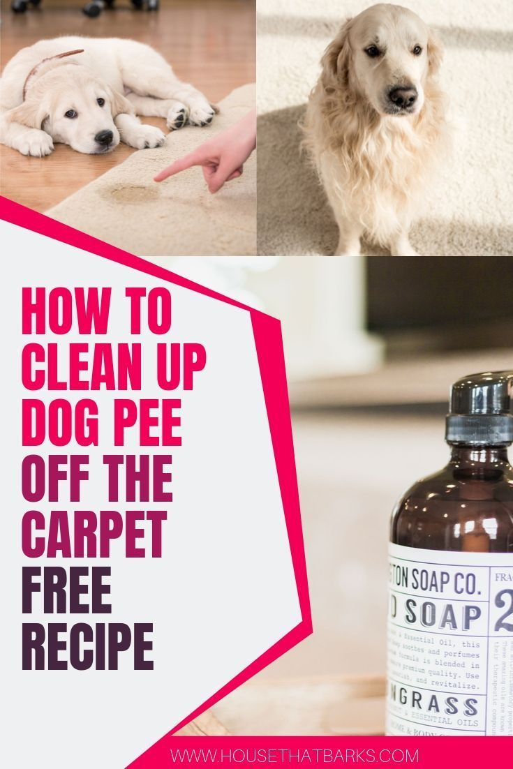 How To Clean Up Dog From The Carpet Naturally