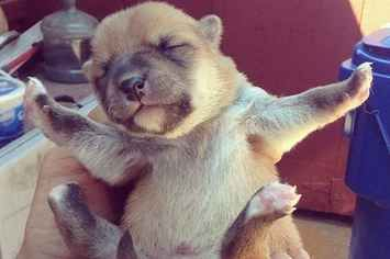 18 Newborn Puppies Ready To Take On The World