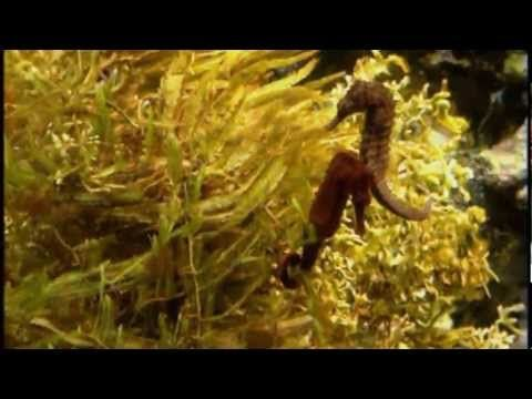 Seahorse Facts For Kids Pictures, Information & Activities