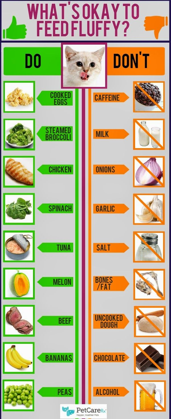 What-food-to-feed-cats-infographic.jpg (600×1465)