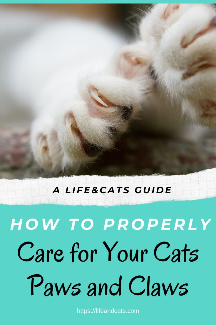 How To Groom Cats Paw And Claw Care In 2020 Paws And Claws Cat Health Cat Paws