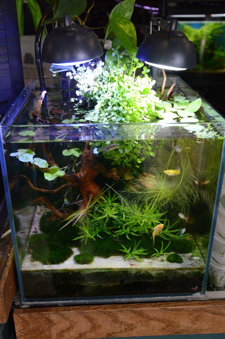 167 best planted nano aquariums images on pinterest for Plant fish tank