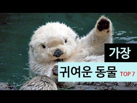 가장 귀여운 동물 top7
