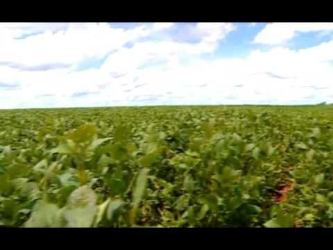 Obama appoints Monsanto shill Tom Vilsack to USDA chief - YouTube