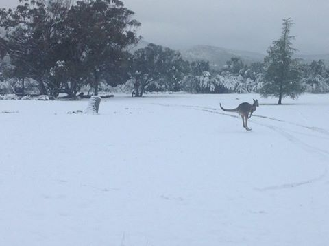 Snow in Southern QLD, NEW PHOTOS: Thick snow covers Stanthorpe region | Toowoomba Chronicle