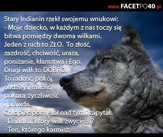 http://www.wiewiorka.pl