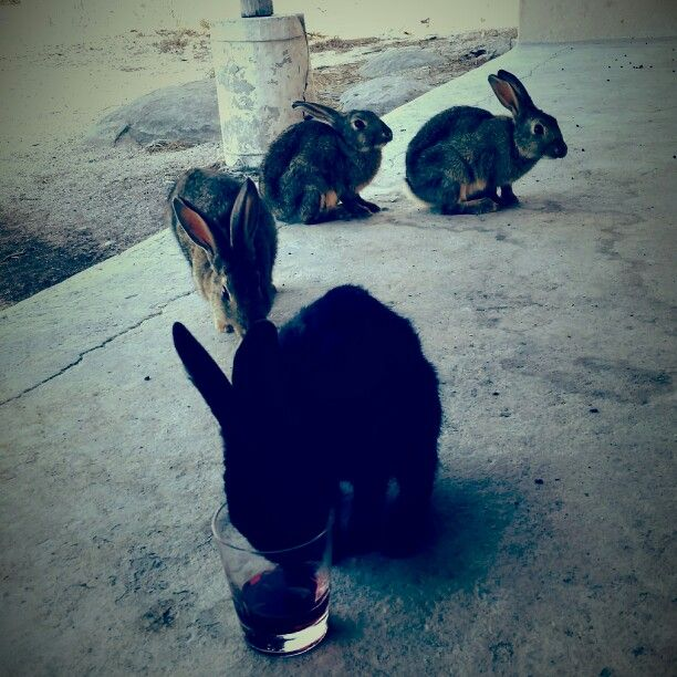 My bunny-bunnies on Jutten island, so sad to leave them behind