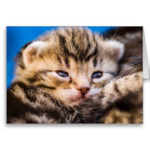 very young kitten grußkarte