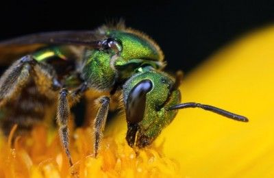 How to protect bees in my yard and garden Many people are concerned about bees and other pollinators. Here are some simple precautions you can take to keep your yard bee-friendly.  Posted on April 10, 2014 by Dave Smitley, Michigan State University Extension, Department of Entomology