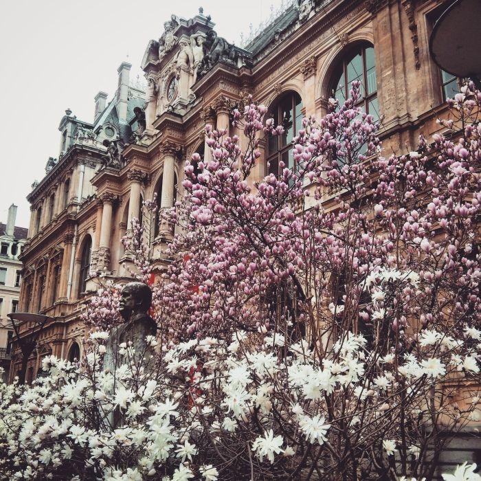 #Lyon #france #spring #magnolia  More on:  http://kokopelia.pl/zakochaj-sie-w-lyonie/
