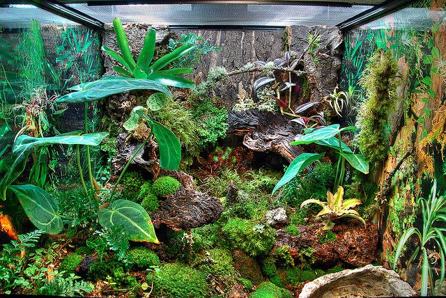 Whites Tree Frogs Vivarium