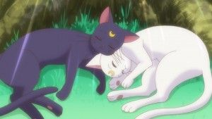 Sailor Moon Crystal Act 26 - Random shot of Luna and Artemis
