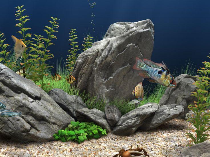 25 best ideas about aquarium screensaver on pinterest for Dream of fish tank