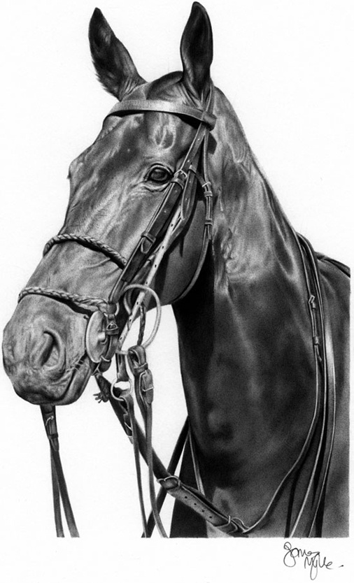 Ballpoint pen drawing of a horse by James Mylne | horse'n ...