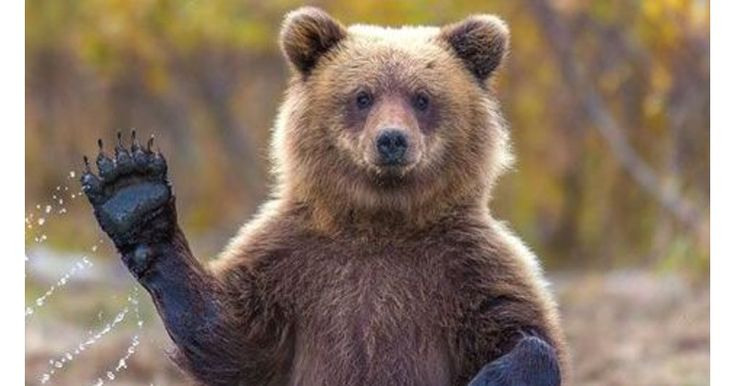 "I got ""Bear"" on ""Spirit Animal Quiz - SpiritHoods"" What about you?"