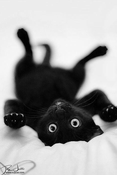 Eyes of the black cat
