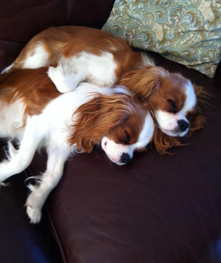 Snuggle Pups.