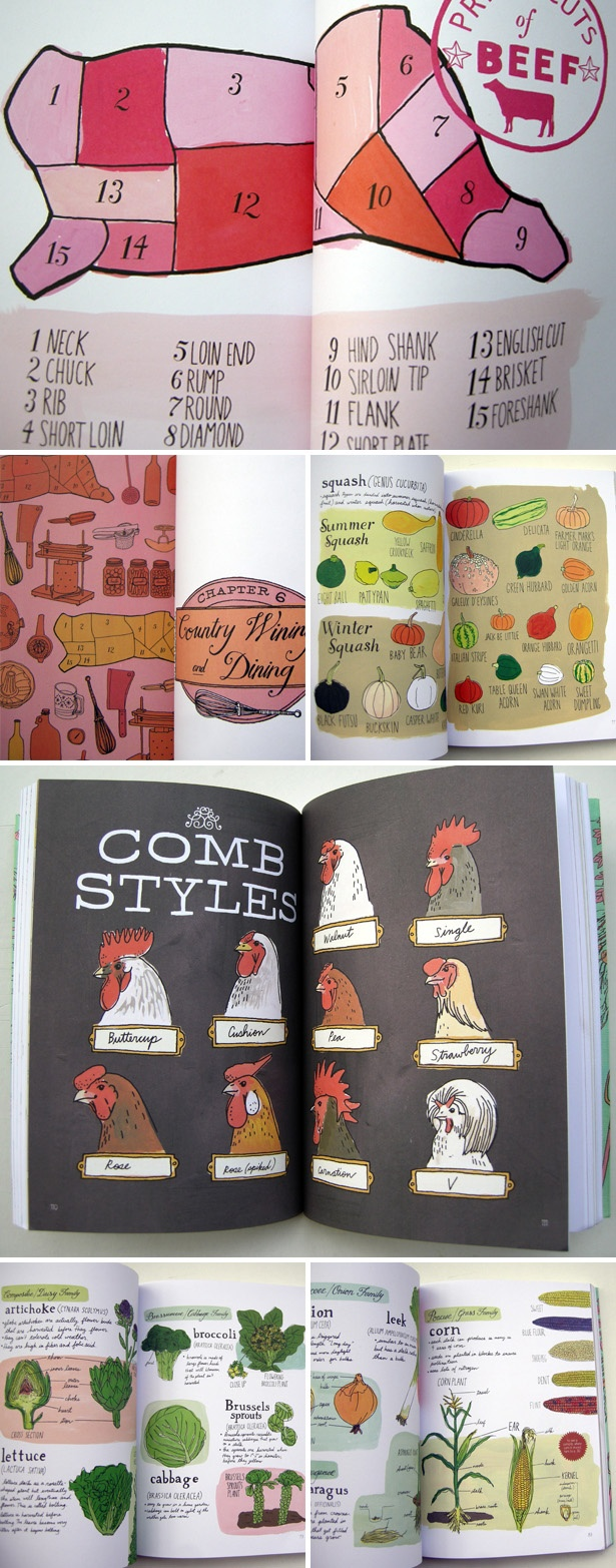 'Farm Anatomy' written and illustrated by Julia Rothman