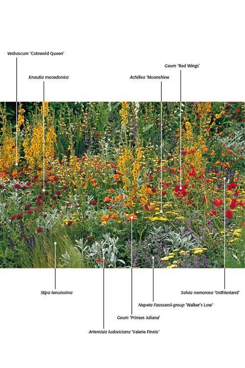 Border met oranje en paarse accenten combinaties van for Pflanzengestaltung garten