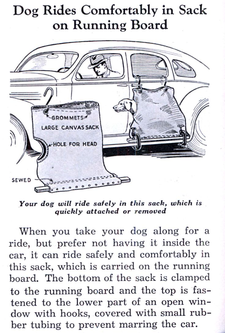 A sack for your dog to ride in along side your car. Circa 1936