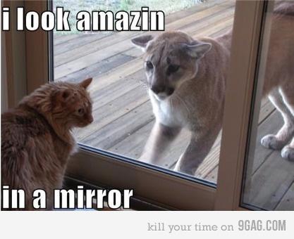 Looks like Jebbie!Kitty Cat, Funny Pics, Mirrors Image, Self Confidence, Mountain Lion, Funny Animal, Glasses Doors, Animal Memes, Mirrors Mirrors