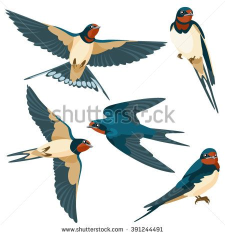 Swallows on white background / Three are two sitting swallows and three flying swallows in cartoon style  - stock vector