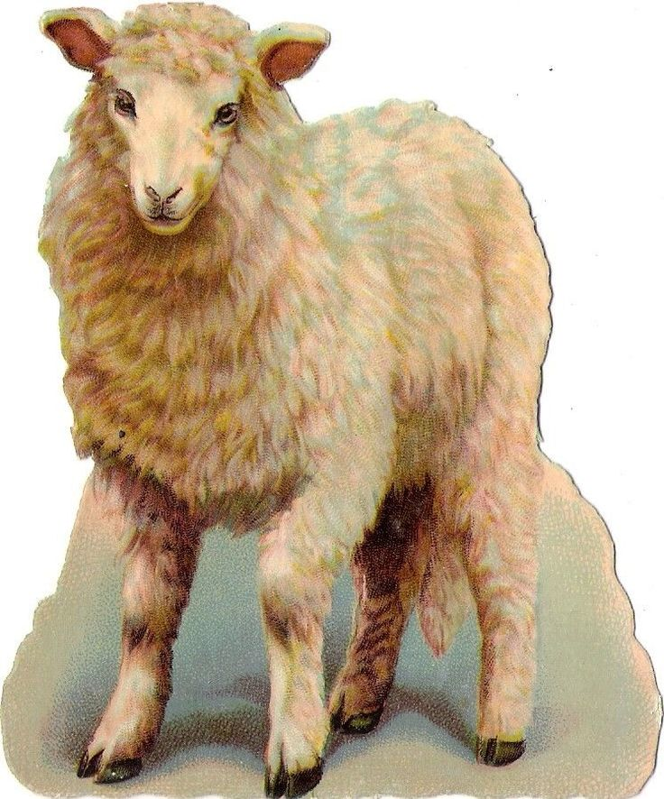 Oblaten Glanzbild scrap die cut chromo Lamm lamb 11,5 cm Schaf sheep mouton